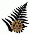 Ноябрьская (49-я) встреча Московского книжного клуба «Цветок папоротника»