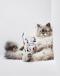 Котики на обложке